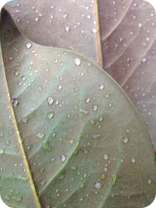 drops_on_leaves